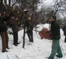 Prikaz rezi sadnega drevja – Hortikulturno društvo Trbovlje
