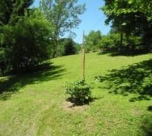 Urejene zelene površine v spodnjem delu Trbovelj!