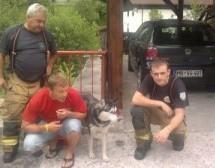 Kako poteka reševanje živali pri Gasilskem zavodu Trbovlje