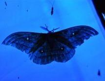 Vabljeni na nepozabno noč metuljev na Kumu