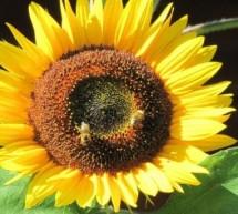 Med slovenskih čebelarjev je varno živilo
