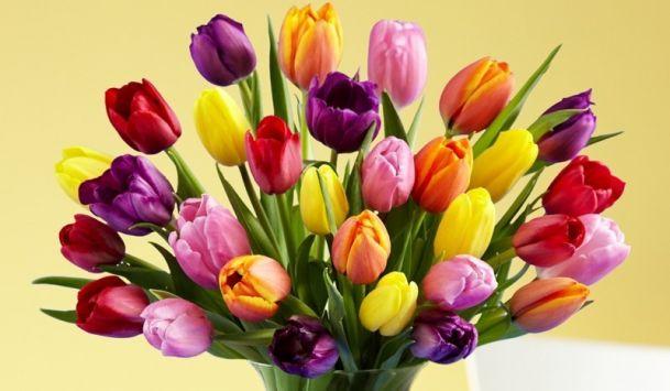 tulips-glossary_110603