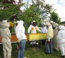Kakovost pridelka in uspeh čebelarjev temelji na izobraževanju