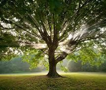 Drevesa – miti, legende, zdravilnost – 2.del