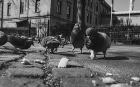 RAZSTAVA – Matic Kos: Domače ptice in zveri
