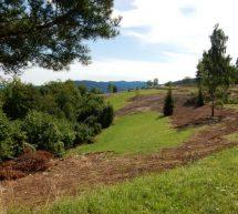 Odstranjevanje zarasti v okviru projekta LIFE TO GRASSLANDS na Kumu zaključeno